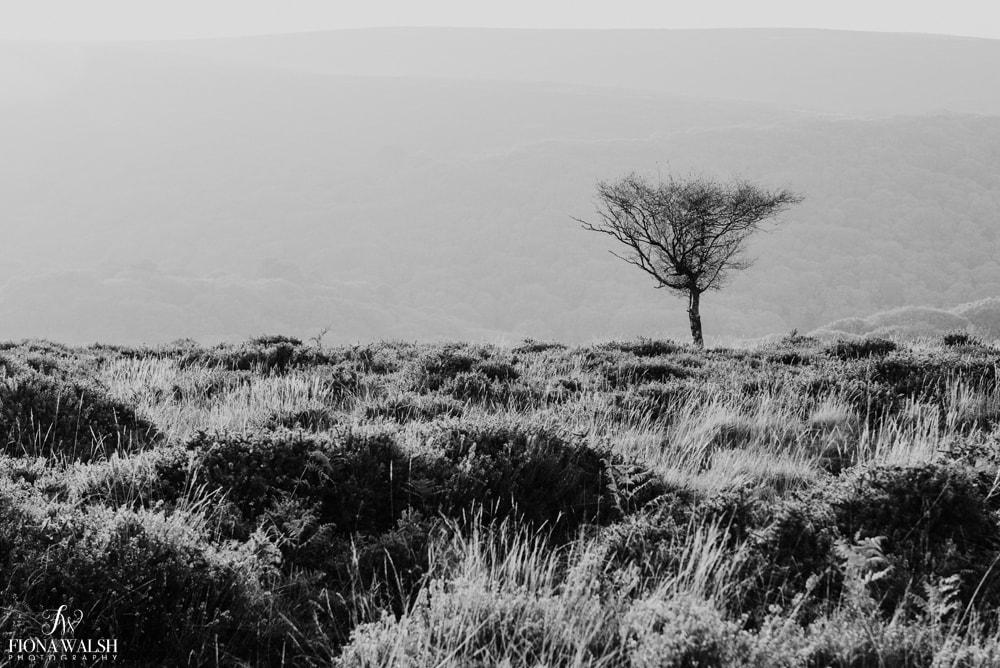 quantock-landscape-photography