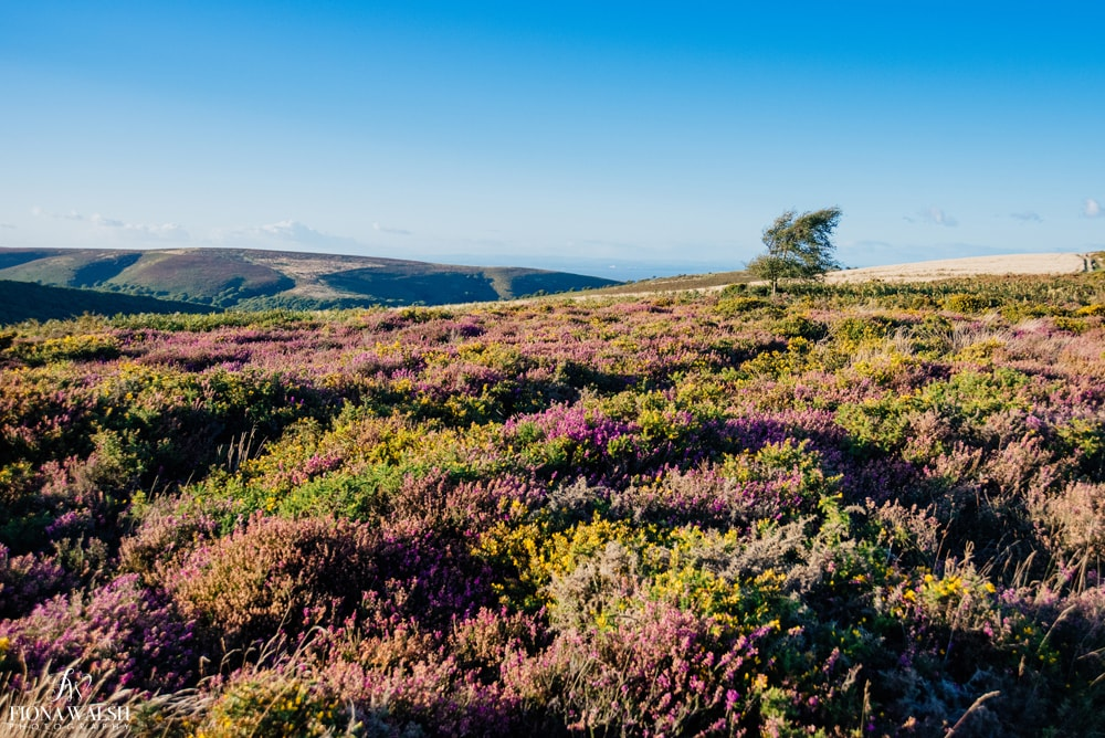 exmoor-photos-for-sale