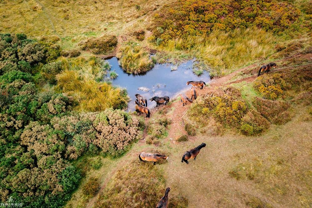exmoor-hills-pictures