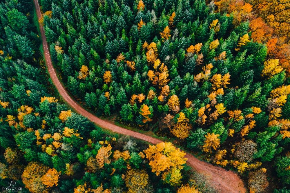 autumn-quantock-hills