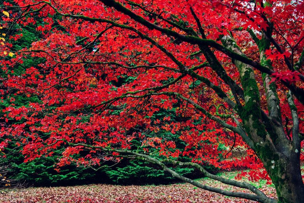 autumn-photos-england
