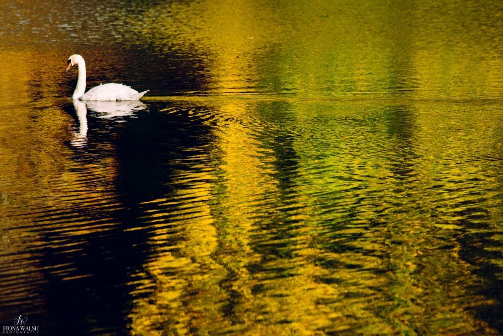 wildlife-photos-autumn