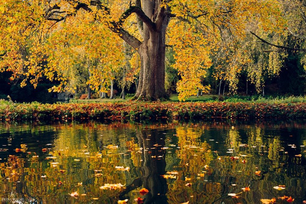 stourhead-autumn