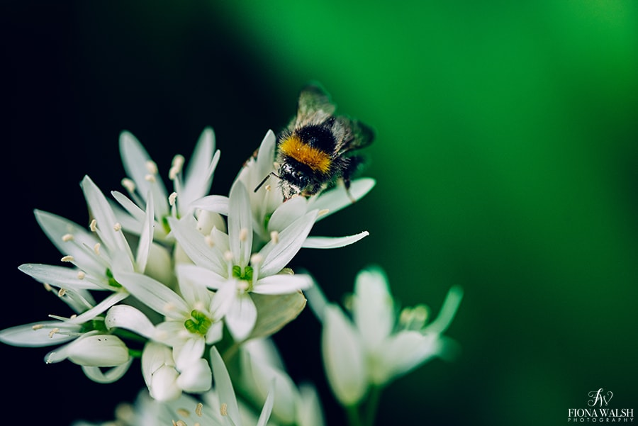 bee-photography